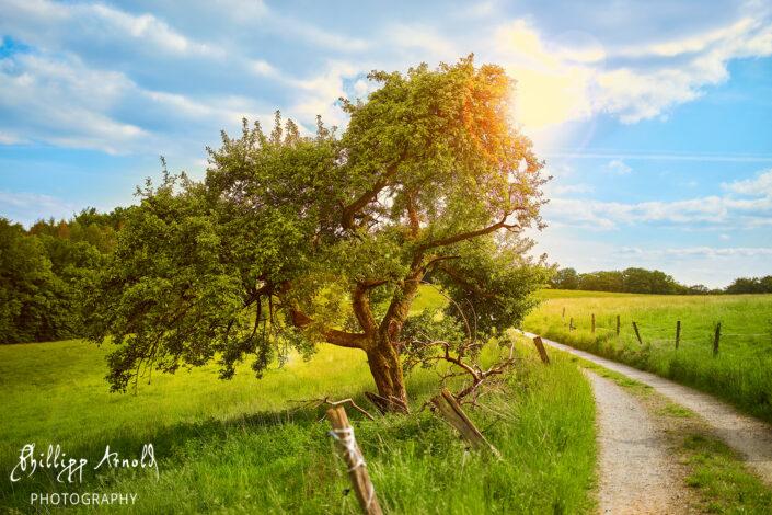 Old Tree V3