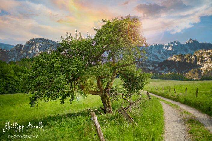 Old Tree V2